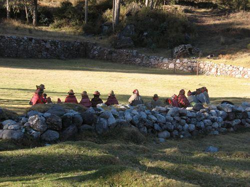 Qero waiting in a field.